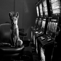 """Totem"" by Jason McGroarty"